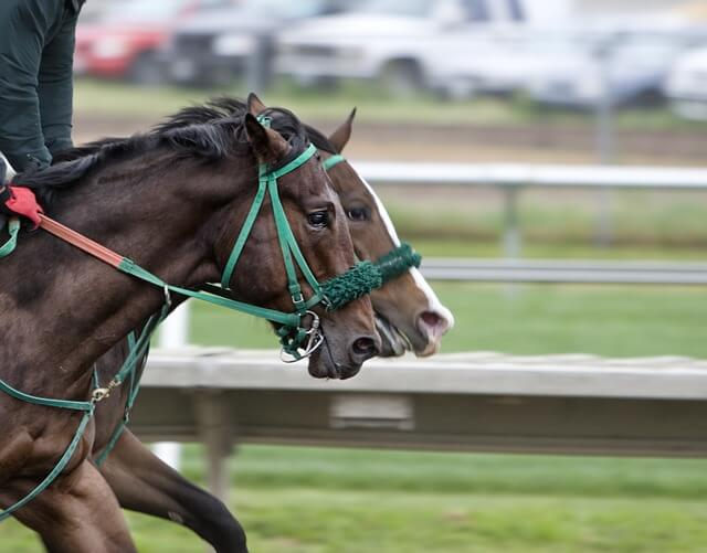 bet365 horse racing guide